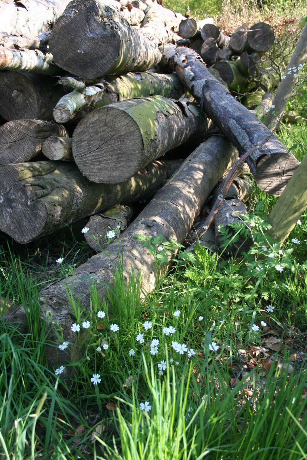 Sustainable logs